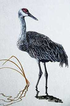 ...нарисовать, птица секретарь и как нарисовать удода.